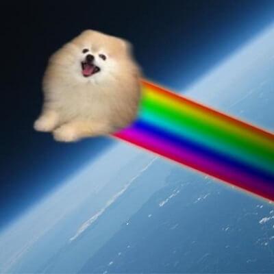 el perro arcoiris sonrie en Cice 1